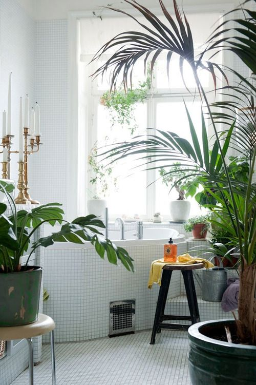 bring nature indoor! - i really wish my bathroom had bright natural light.