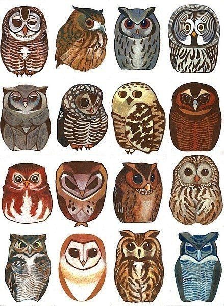I'm thinking of trying to make an owl collage. Maybe these will be helpful.