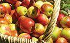 Obst und Gemüse aus dem Garten richtig einlagern