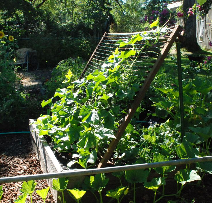 Just because it's a bed spring doesn't mean it isn't a cucumber trellis. « Women Who Run With Delphiniums