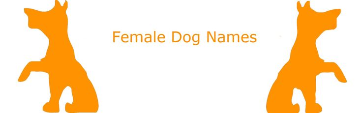 Looking for a unique female dog name for your beautiful new pup? We have every name you could ever want!