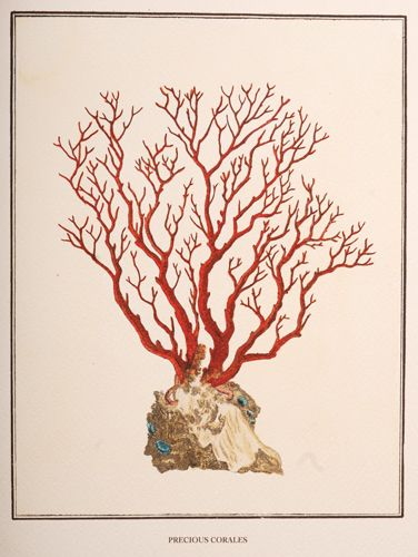 Antique Red Coral 4