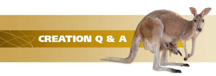 Why Do Kangaroos Live Only in Australia? | The Institute for Creation Research