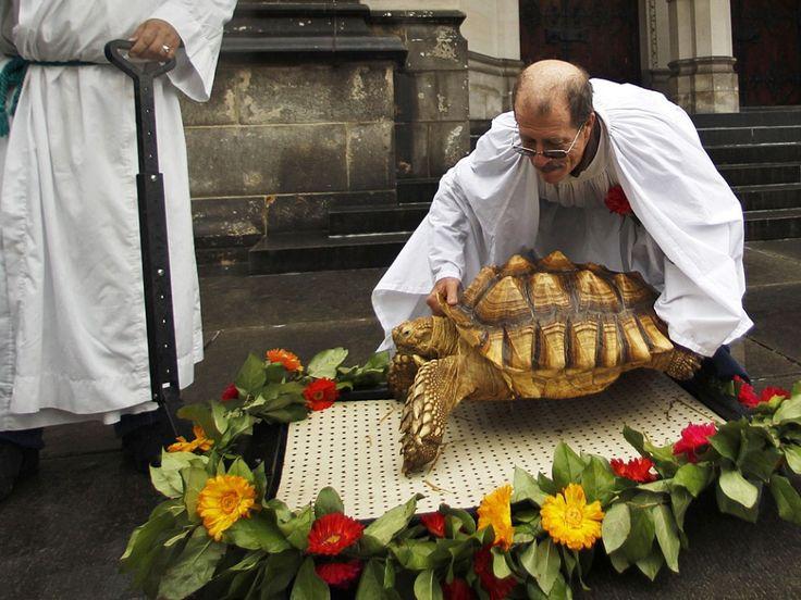 Een sulcata-schildpad wordt gezegend in de Saint John the Divine Kathedraal in New York ter ere van het feest van Franciscus van Assisi. Franciscus van Assisi is de beschermheilige van de dieren en de natuur.