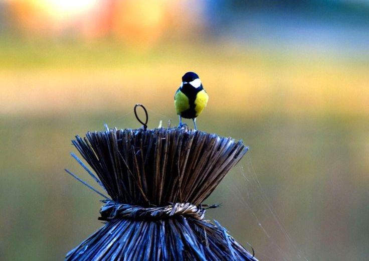"""Title: """"Rest"""". Little tomtit at bird feeder."""
