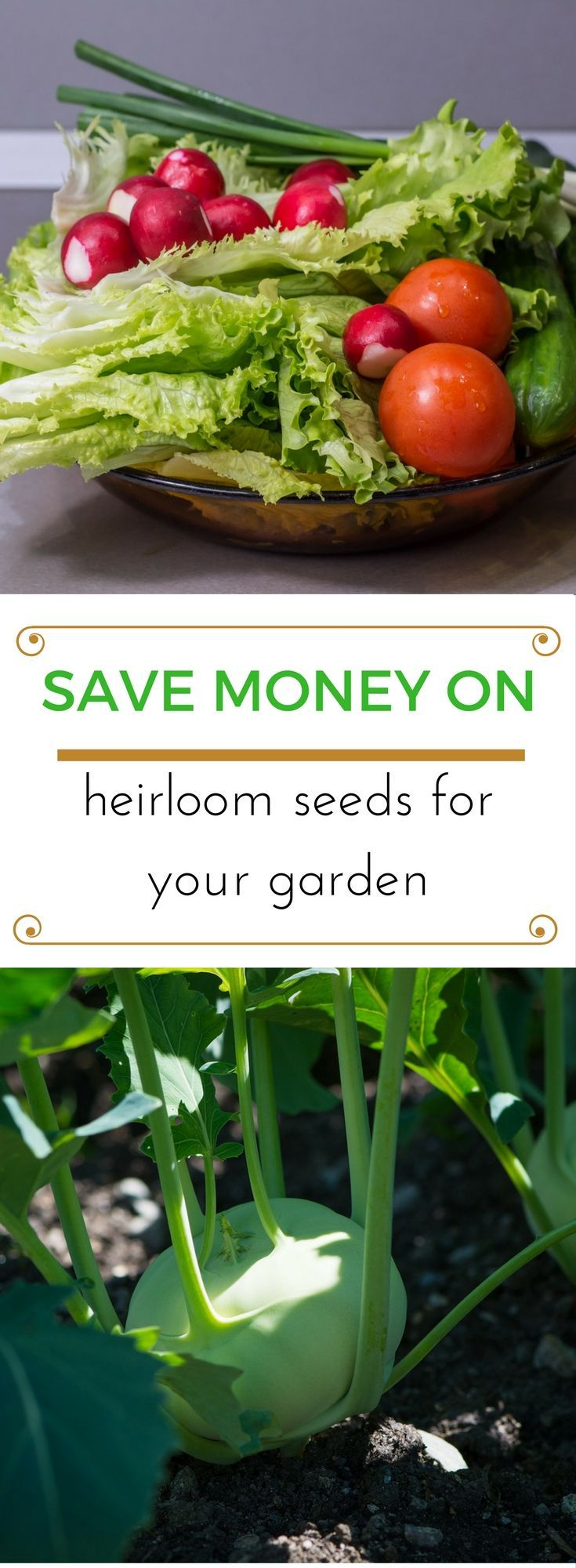 Kitchen Garden Seeds 25 Best Garden Seeds Trending Ideas On Pinterest Organic Seeds