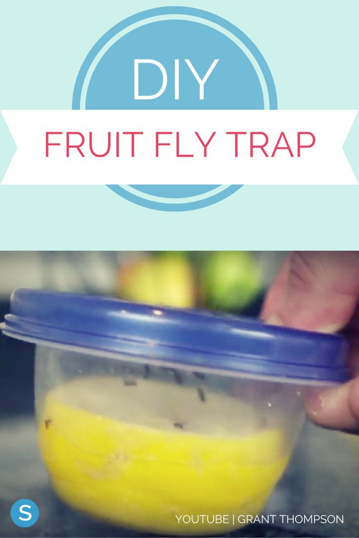 dip for fruit diy fruit fly trap