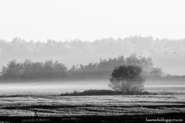 Kasztanki - fotoblog: Bo mnie jest szkoda lata / Summer sorrow
