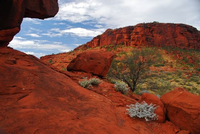 Palm Valley in the N.T. is a dramatic place to visit; the red rocks, water and palms are such a contrast.