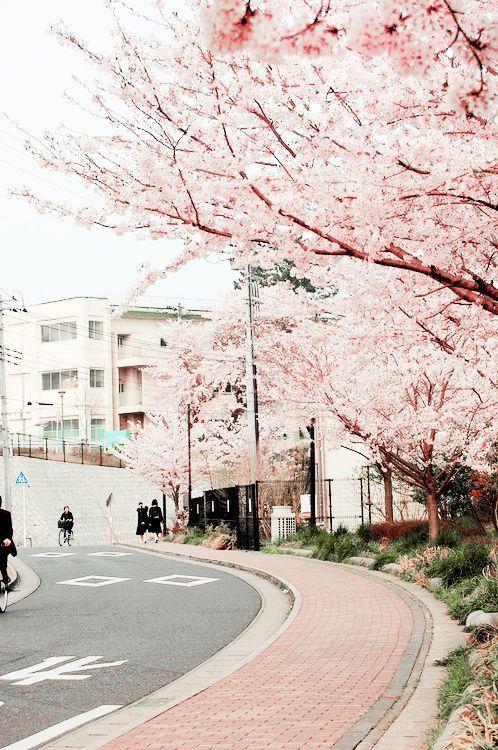 Blippo Com Kawaii Shop Japan Japan Cherry Blossom