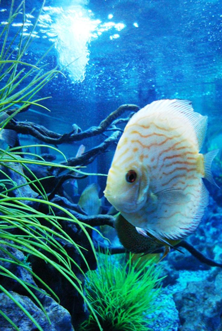 Aquarium at Secret Zoo