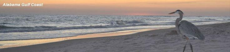 Gulf Shores AL Condos For Sale   Alabama Gulf Coast Beach Real Estate