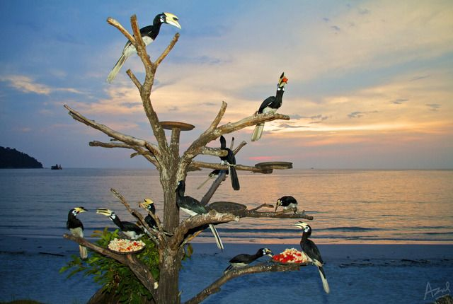 Pangkor Island Beach Resort - Lumut, Malaysia | AFAR.com
