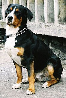 most incredible dog breed i've ever encountered  - - of course, i'm a little biased