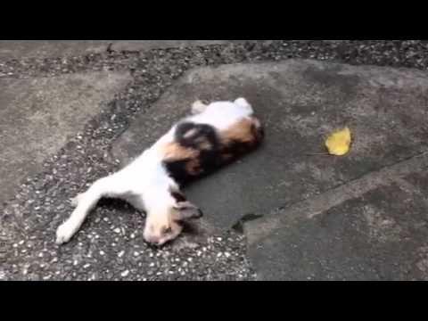 Hidey the stray kitty