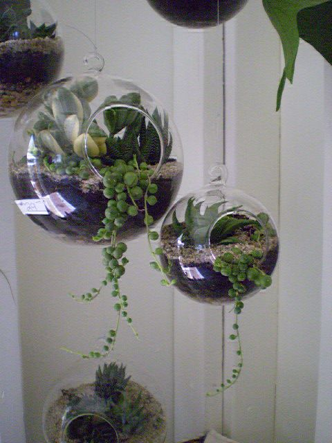 terrarium globe- I think I actually have several of these glass globes...all I need to do is buy the plants and create!