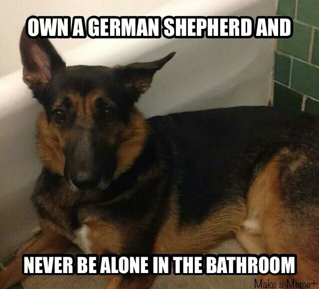 This is just hysterical. My GSD does this same thing every single time I go to the bathroom.