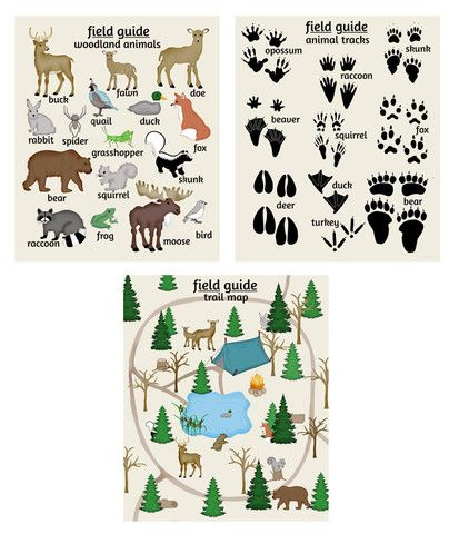 Field Guide Woodland Art Collection - Woodland Animals, Animal Tracks & Trail Map / Camping Guide. Nursery Art Woodland theme