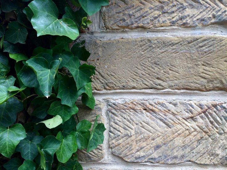 Vine meets sandstone brick