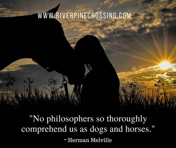 """""""No philosopher so thoroughly comprehend us as dogs and horses."""" Herman Melville"""