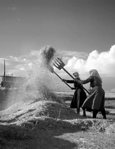 Λίχνισμα με ειδικό φτυάρι ή δικράνι Φωτ, Τάκη. Τλούπα, του 1956