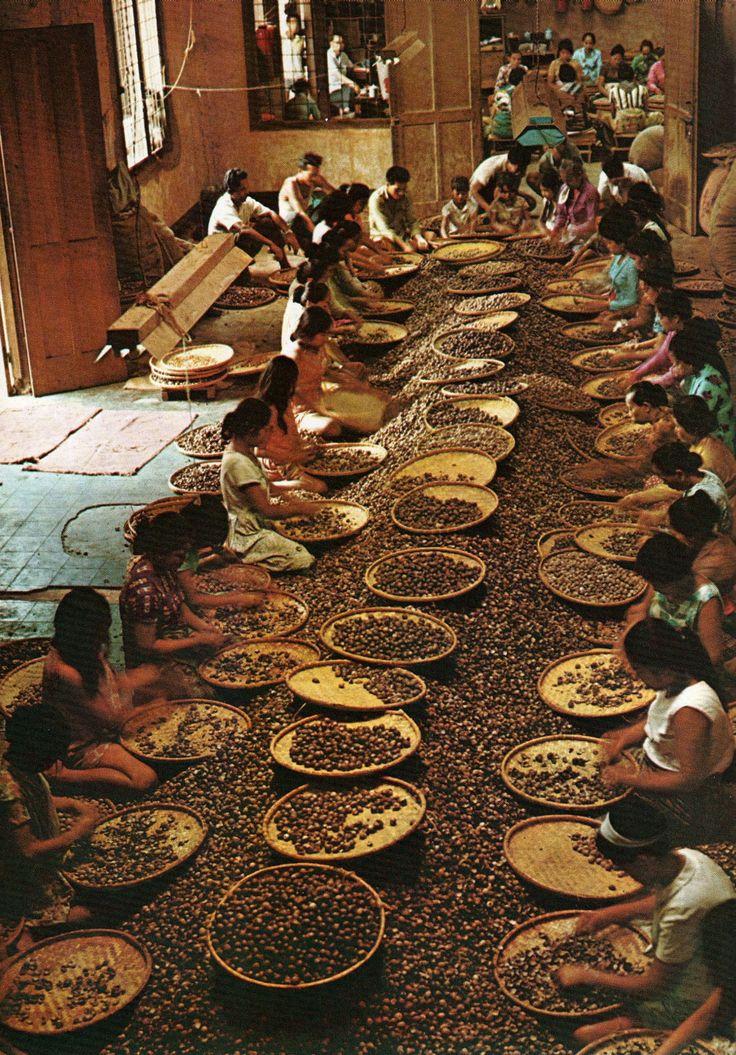 Sorting of nutmeg in Indonesia, 1970