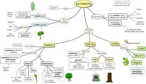 Mappa concettuale  su  LE PIANTE ( semplici e complesse ): radici  (fittone e fascicolate), fusto (stelo e tronco)  e rami ...     STAMPARE...