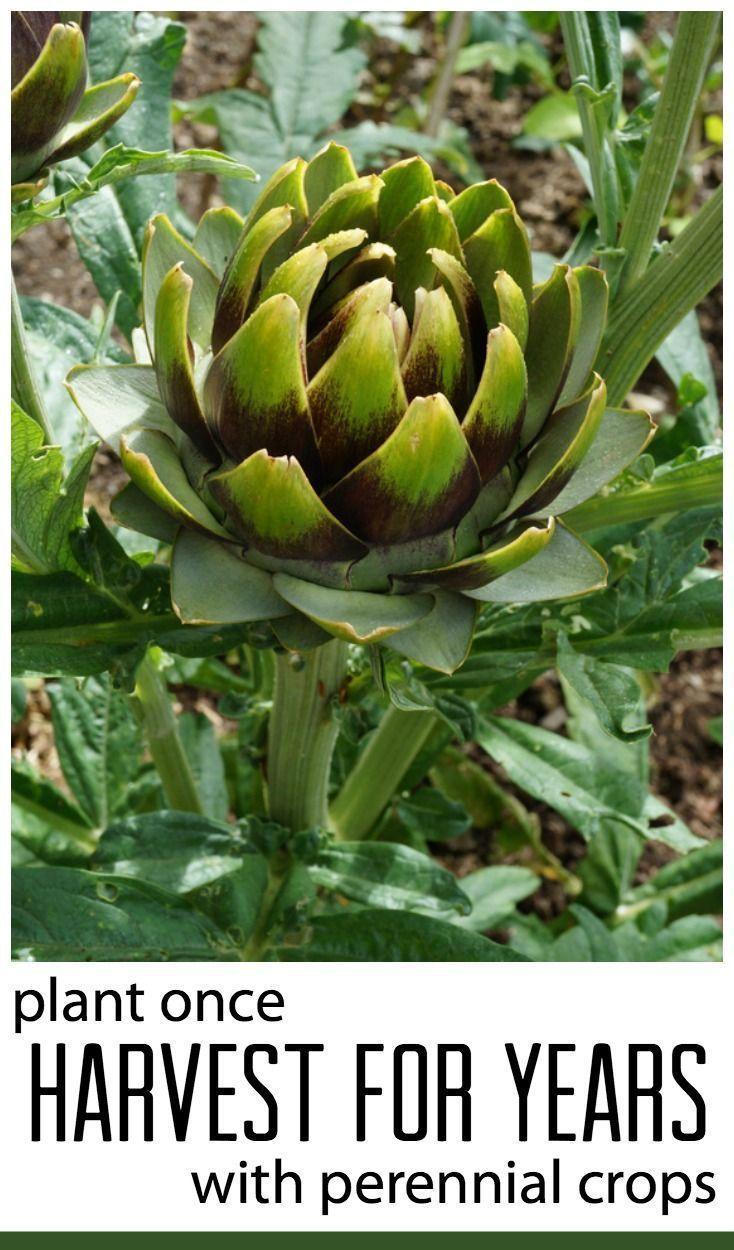Best 25+ Apartment vegetable garden ideas on Pinterest | Growing ...