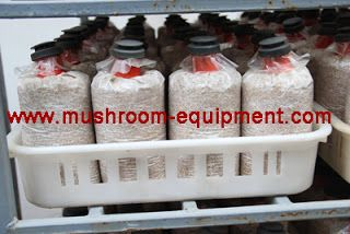 mushroom equipment,mushroom equipment,growing mushrooms indoors: Filter bag for mushroom cultivation