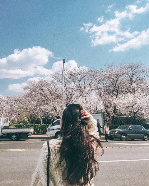 girl, hair, sakura
