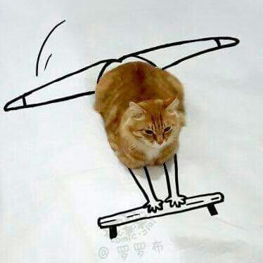Gatto volante!