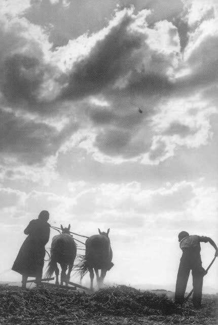 Takis Tloupas, Larisa ,Greece ,1948 -Τάκης Τλούπας-Αλώνισμα με αδοκάνη-Τερψιθέα Λάρισας ,1948