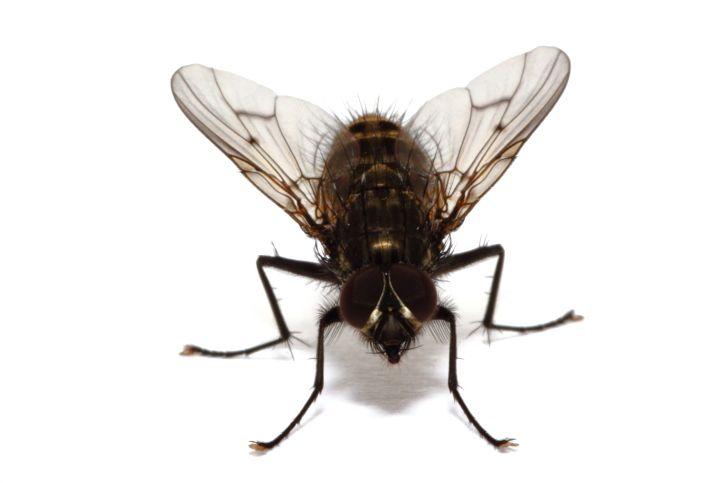 Cómo deshacerse de las moscas en el hogar