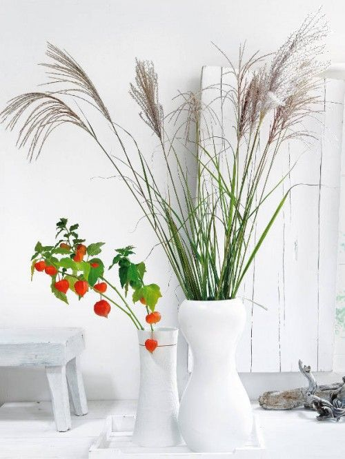 white planters with tall grasses for the back deck