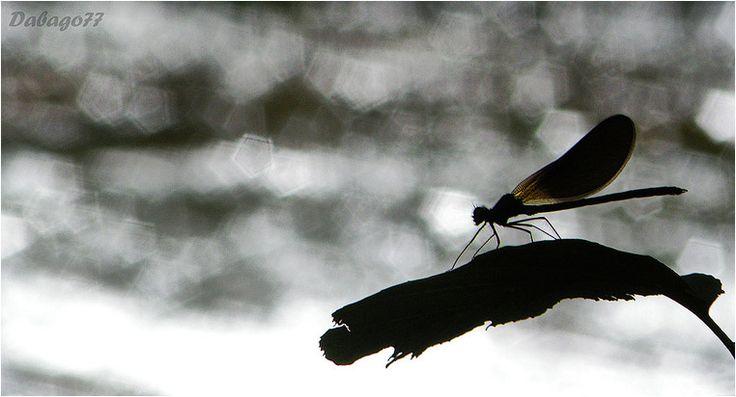 Best Photos of the Day in #Emphoka by David BG [Nikon Coolpix P80] - http://flic.kr/p/fjurFt