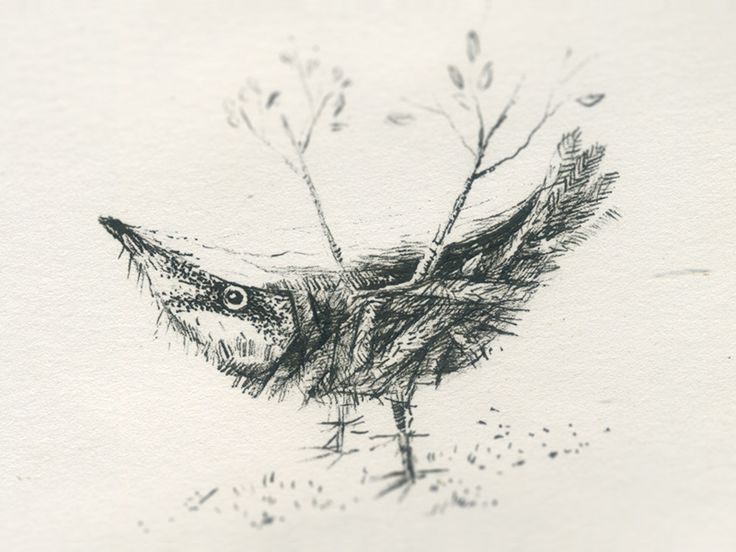 Bird sketch, practice to get back into etching / intaglio printing.