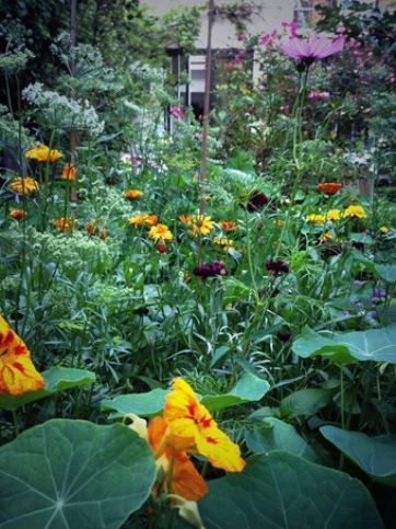The Higgledy Garden Bed - Nigel Slater