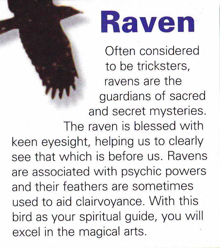 Raven spiritual guide