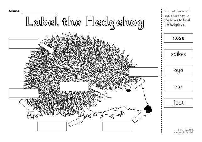 Label the Hedgehog Worksheet (SB11353) - SparkleBox