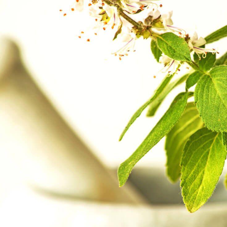 7 Adaptogen Herbs to Lower Cortisol