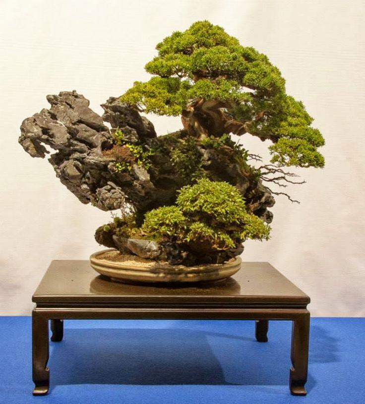 rock 753 best bonsai tree images on