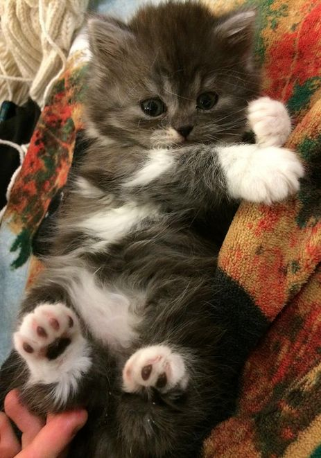 This girl who might be the cutest kitten in the history of kittens. | 39 Adorable Pictures You Need To Stop And Look At Right This Second
