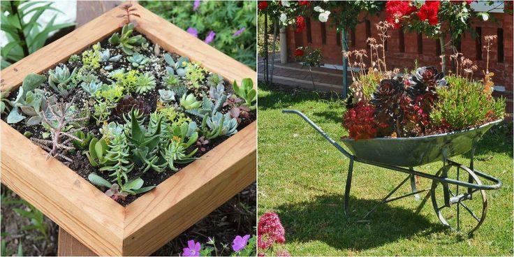 15726 best plantas red facilisimo images on pinterest for Como decorar mi jardin con plantas