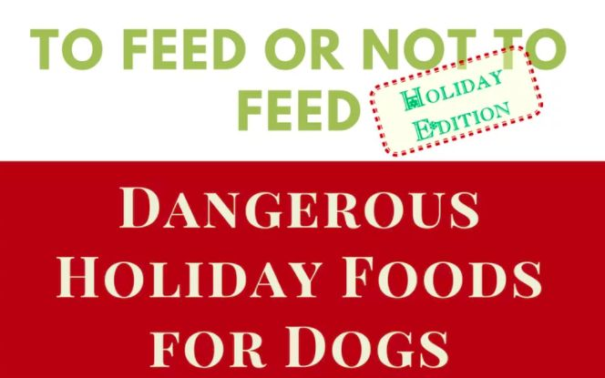 Keep your holidays free of an emergency vet visit by not feeding your pupper… https://gooddoggies.online/dangerous-holiday-foods-for-dogs/