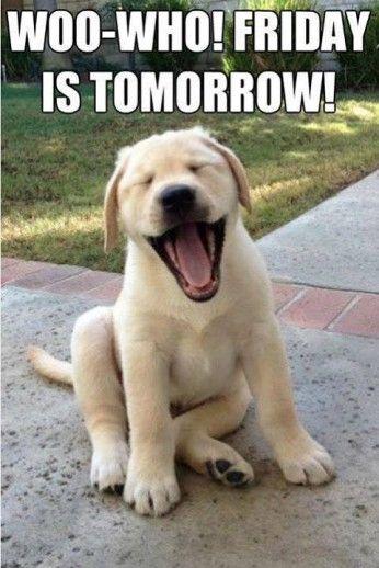 Woo who! Friday is tomorrow friday happy friday tomorrow is friday happy friday quotes