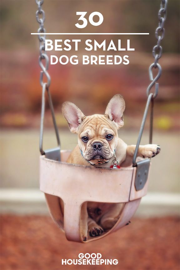 If you're short on space, these small dog breeds could fit the bill. This category typically weighs in at 7 to 35 pounds.
