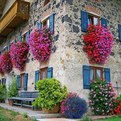 I have not idea where photo is from, but the Ivy geraniums are everyone's favourite here in Belleville,  Ontario.  They do very well and look so beautiful hanging from lamp posts downtown.  Will try them down south, but will have to really water and protect from direct sun, I am thinking...