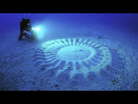 20 Bizarre Phenomenons in Nature