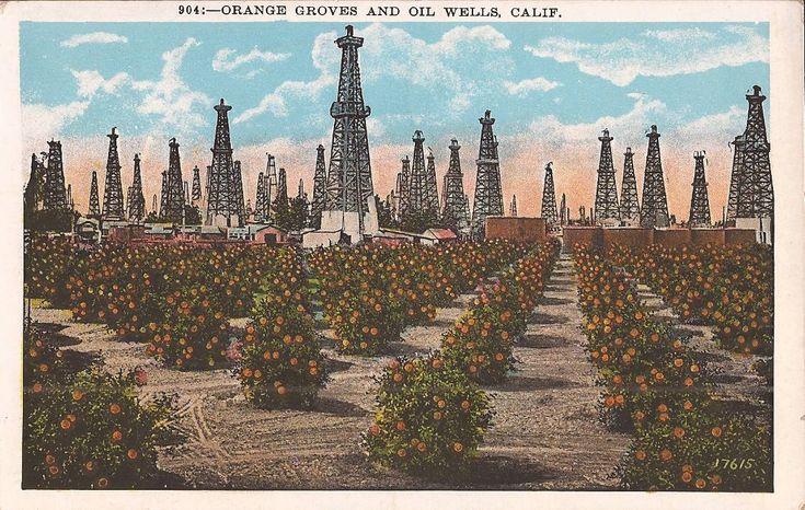 Vintage postcard california orange groves oil wells