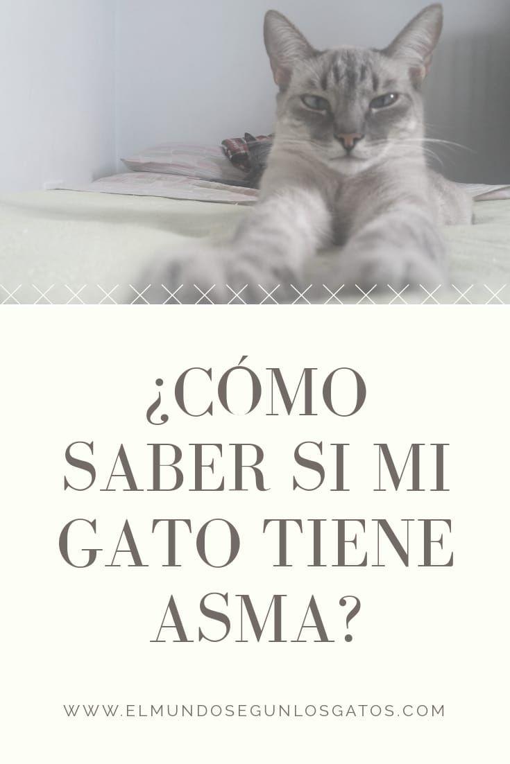 Mi Gato Tiene Asma El Mundo Según Los Gatos Asma Felina Funny Cat Gifts Funny Cats Cat Gifts